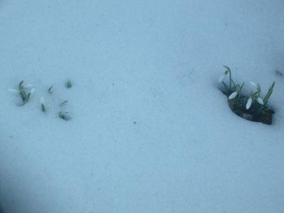 Kibújtak ismét a hópaplan alól