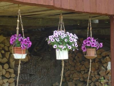 Virágfüggőkben új virágok