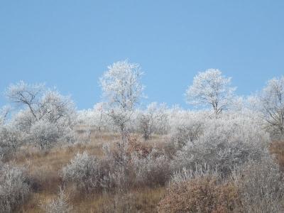 Zúzmarával köszönget a tél (November 23.)
