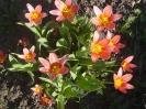 Tavaszi éledés... (Április 03.)