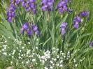 A májusi kert szépségei...