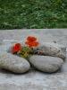 Nem kővirág :-)