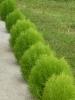 Zöld bokrocskák