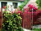 Rózsás bejárat