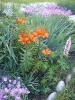 Virágzó liliomok