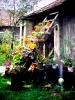 Az udvar virágai közül...(parókia, Bogártelke)