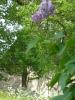 Májusi temetőkert