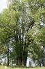 Öreg fák árnyékában...