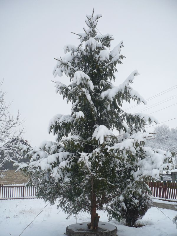 Hóval borítva...