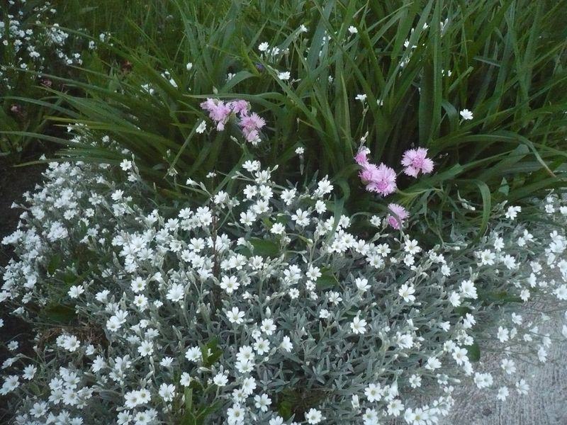 Júniusi virágözön