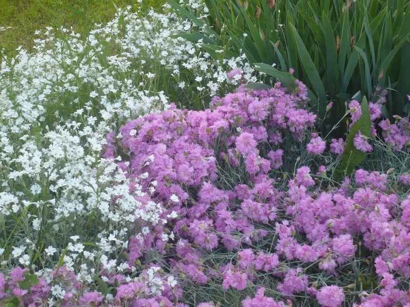 Pünkösdi virágoskert